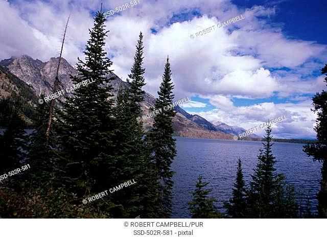 Trees at Jenny Lake, Grand Teton National Park, Wyoming, USA