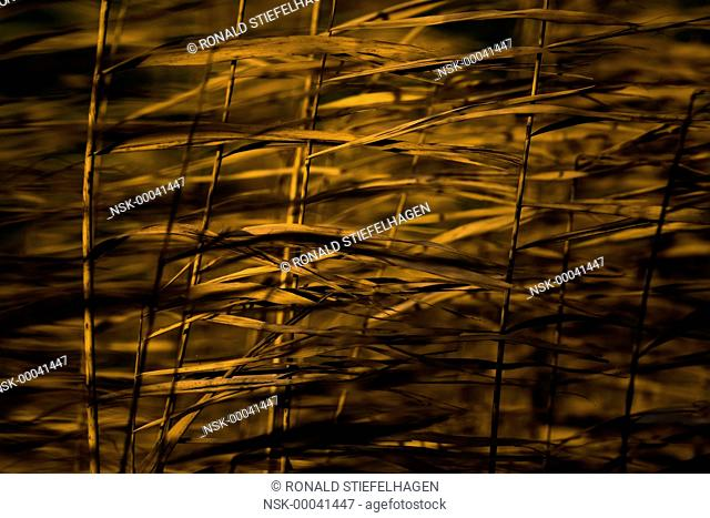 Abstract detail of unidentified vegetation lit by the morning sun and moving in the wind, The Netherlands, Utrecht, Utrechtse Heuvelrug