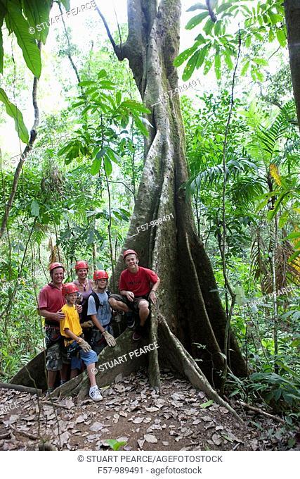 Ceiba tree in Hacienda Baru, Costa Rica