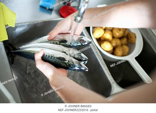 Hands washing fish