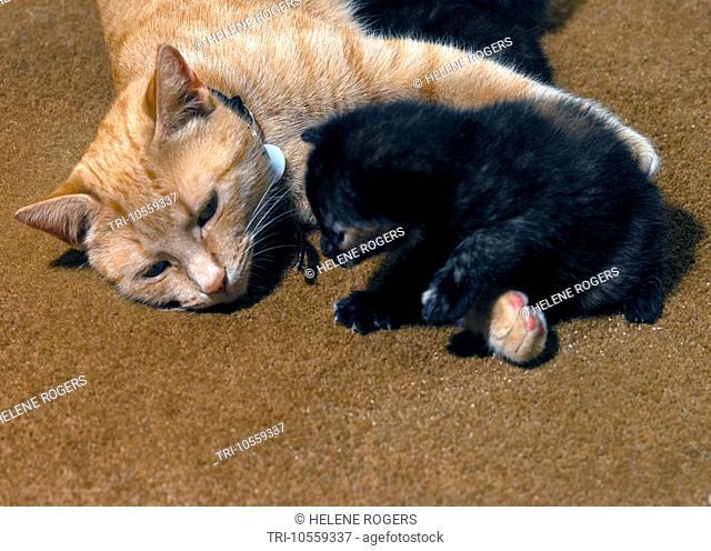 Mother Cat & Two Week Old Kitten
