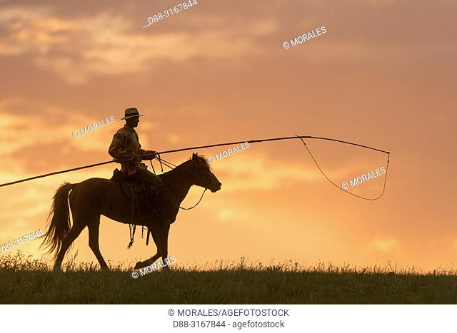 China, Inner Mongolia, Hebei Province, Zhangjiakou, Bashang Grassland, Mongol on a horse, with a catch lasso