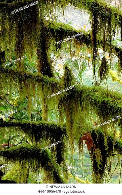 englishman river falls, BC, British Columbia, Canada, park, trees, moss