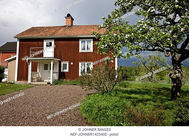 Wooden house with blooming apple tree