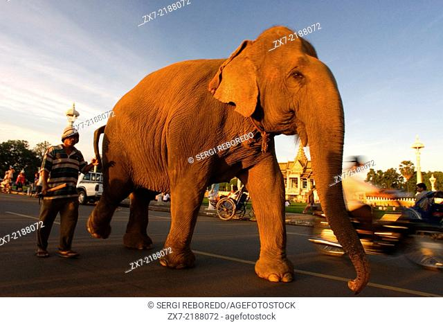Elephant walkong in the street at Royal Palace outside. Phnom Penh. The Royal Palace of Cambodia is a complex of buildings