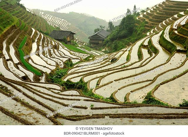 paddy fields near Ping An village in Guilin area of China