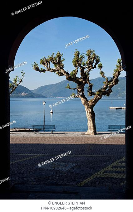 Switzerland, Europe, Ticino, Ascona, Lago Maggiore, lake, curve, tree