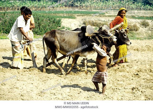 A fermar family preparing land for paddy plantation a mahashtangor,bagura