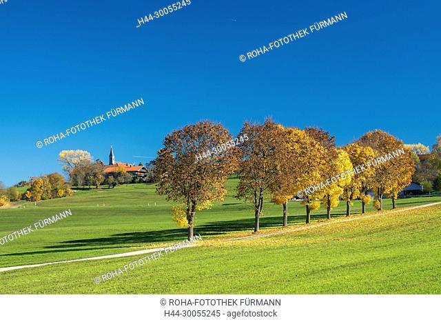 Bild- Foto- roHa-Fotothek, Bayern, Oberbayern, Berchtesgadener Land, Rupertiwinkel, Anger, Steinhögl, Steinhoegl, Herbst, Allee, Alleebäume, Alleebaeume