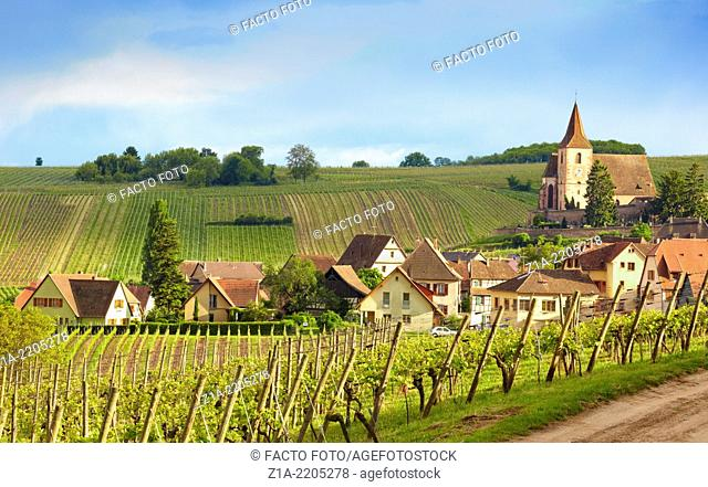 Vineyard landscape at Hunawihr village with the church of Saint-Jacques-le-Majeur at the background. Hunawihr, Alsace, France, Europe