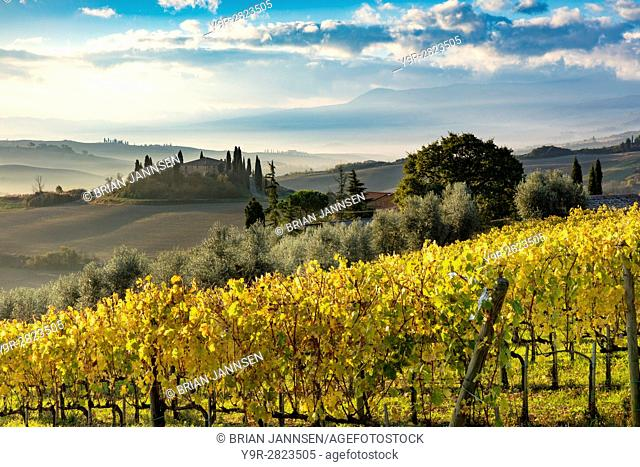 Early morning over vineyard and the Belvedere near San Quirico d'Orcia, Tuscany, Italy