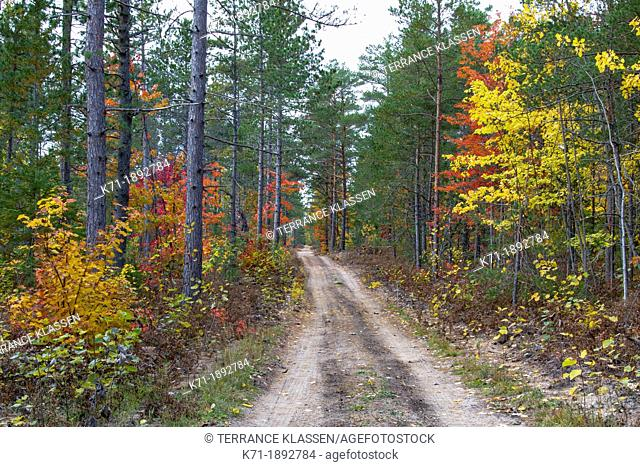 A road with fall foliage color through the deciduous forest of the Uppper Penninsula of Michigan, USA