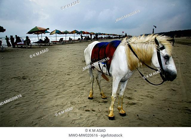 Horses can be rent at the Cox's Bazaar beach for riding Cox's Bazaar, Bangladesh April 18, 2009