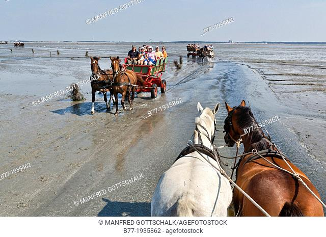 Germany, Lower Saxony, North Sea, tourists utilizing the low tide to traverse the mudflats from Neuwerk Island to Cuxhaven by horse carriages