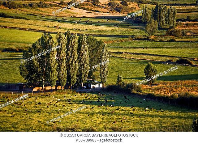 Coria. Cáceres province. Extremadura. Spain