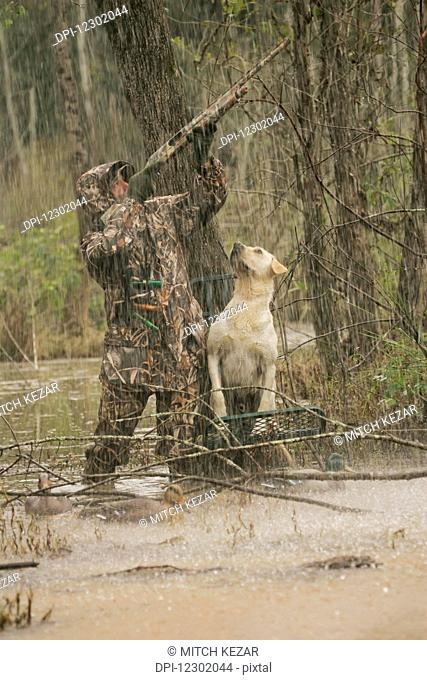 Hunter aiming at waterfowl while standing in flooded timber with yellow lab