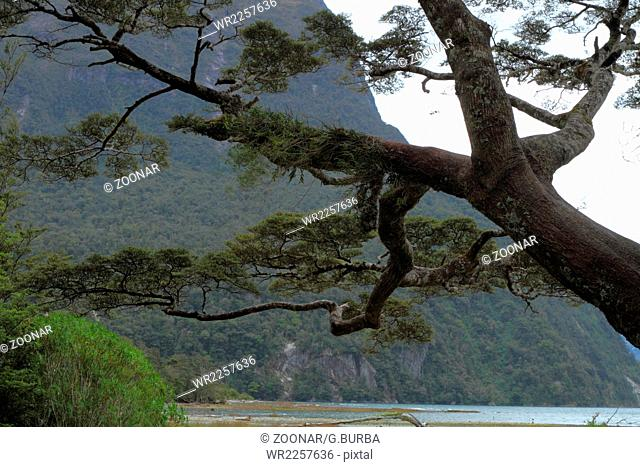 Tree fragment in Milford Sound