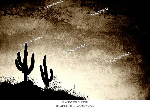 Cacti silhouetted against the afternoon sky in the desert landscape typical of the region near the town of Belen, Catamarca Province