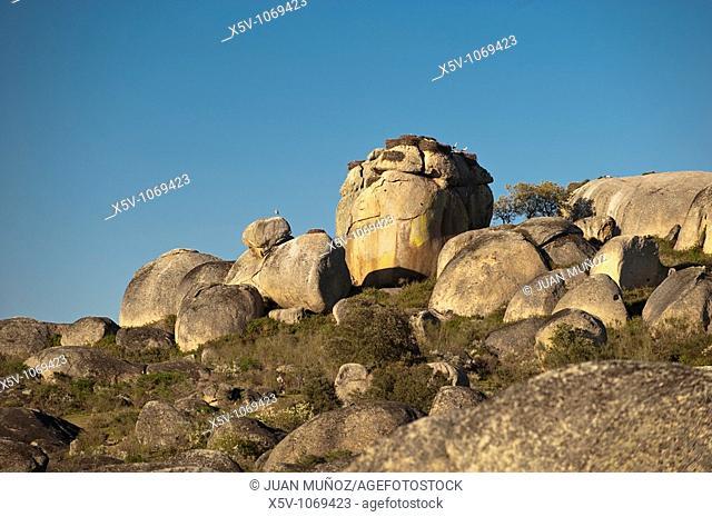 Nests of storks in granitic rocks. The Barruecos. Malpartida de Caceres. Caceres. Extremadura. Spain