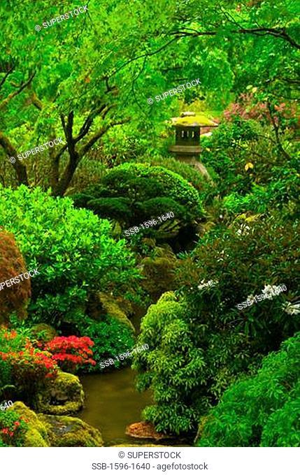 Plants in a Japanese garden, Washington Park, Portland, Multnomah County, Oregon, USA
