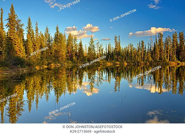 Reflections in a boreal pond, Enterprise, Northwest Territories, Canada