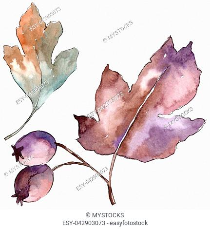 Leaves of hawthorn in a watercolor style isolated. Aquarelle leaf for background, texture, wrapper pattern, frame or border
