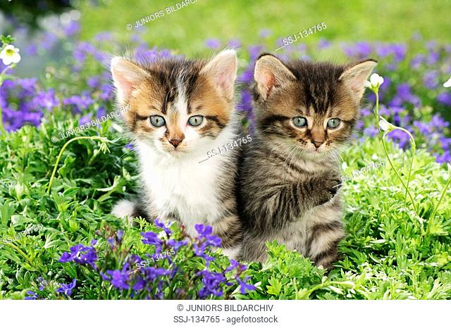 two kittens in between flowers