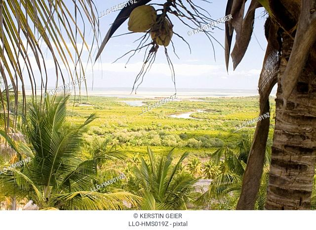 Elevated view over mangrove flood plain, Barra, Inhambane Province, Mozambique