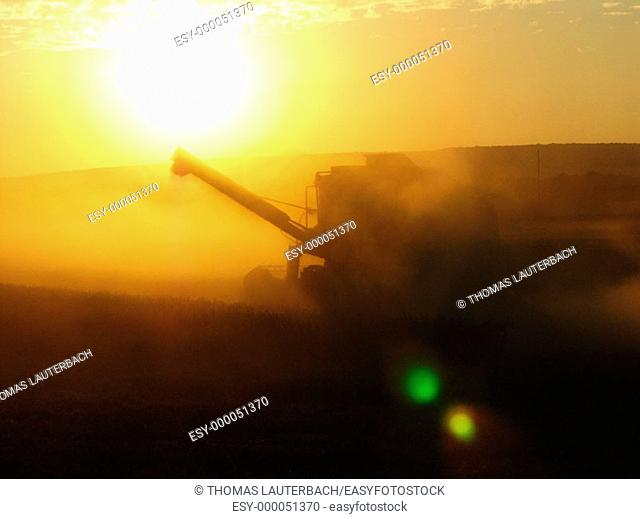 Wheat harvesting. Lower Saxony, Germany