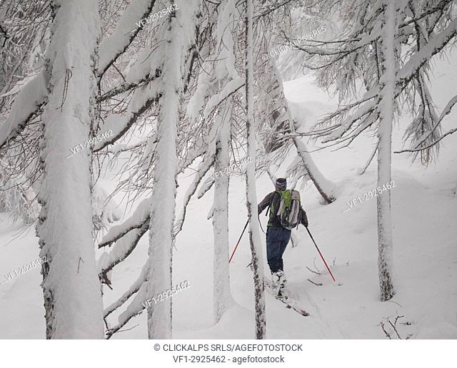 Skier in the forest, Valgerola, Valtellina, Lombardy, Italy, Alps