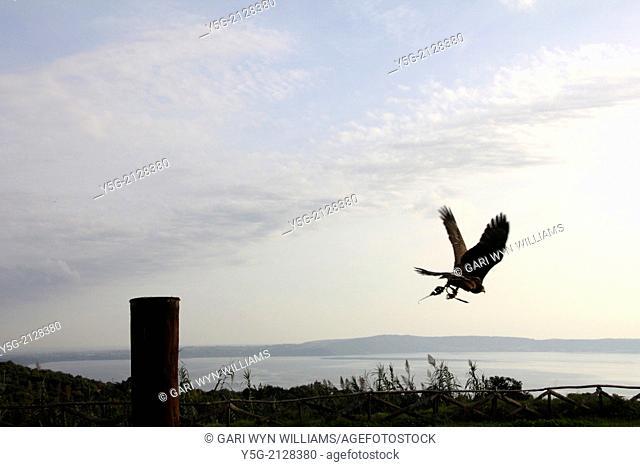 bird of prey sanctuary in italy