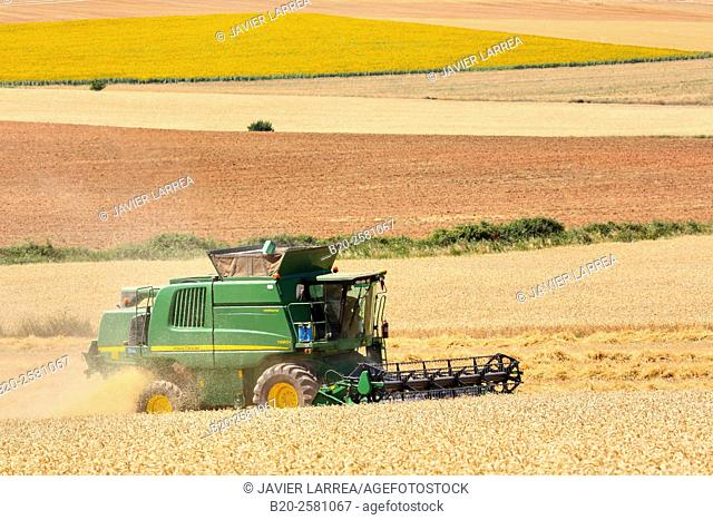 Combine harvester on field of wheat 'Learza' estate Near Estella, Navarre, Spain
