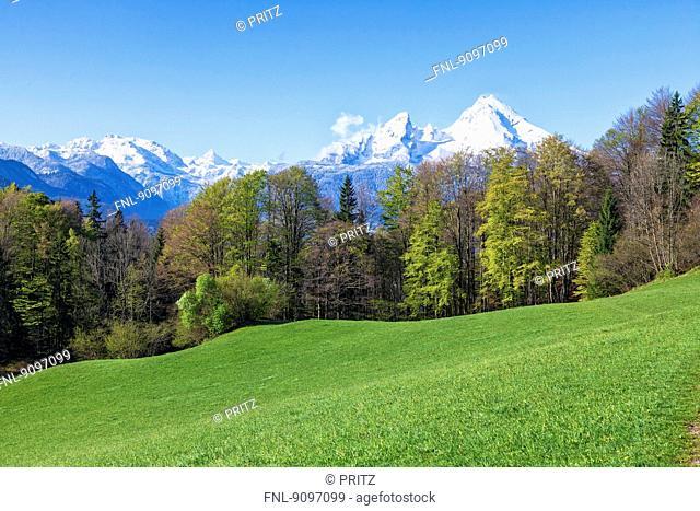 Spring above Berchtesgaden with Watzmann, Bavaria, Germany