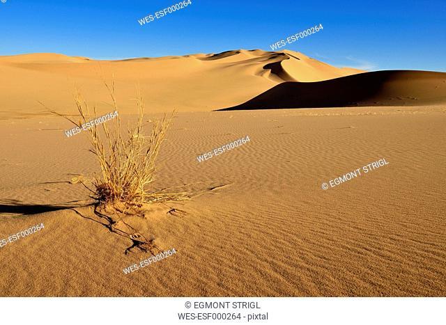 Algeria, Sahara, View of sand dunest Erg Takaraft