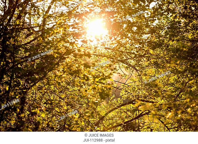 Sun shining behind tranquil trees