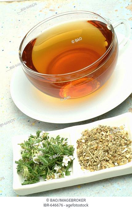 Yarrow (Achillea millefolium), herbal tea, medicinal tea