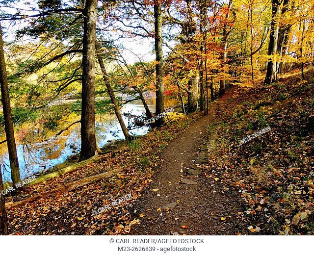 A hiking path follows a stream through the autumn color, Pennsylvania, USA