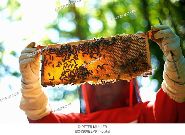 Beekeeper holding hive frame in front her