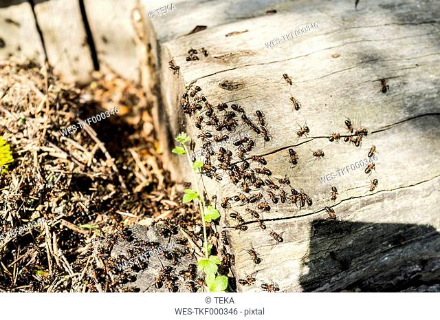 Ants crawling on wooden stair