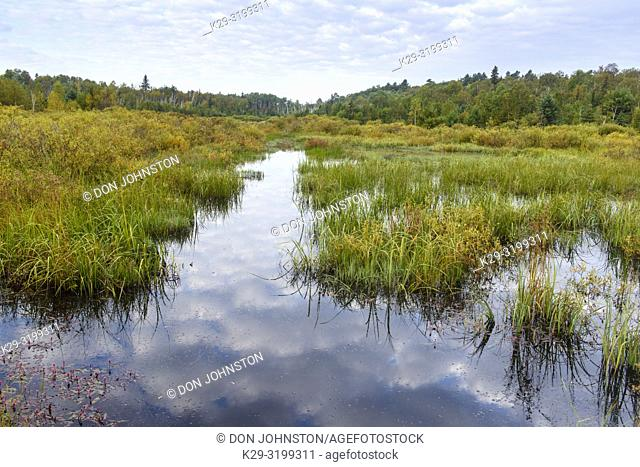 A water channel in a beaver pond, Greater Sudbury, Ontario, Canada
