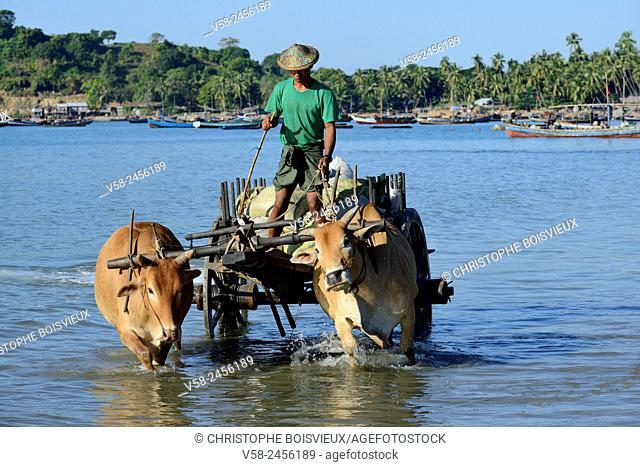 Myanmar, Rakhine State, Ngapali surroundings, Lon Tha bay, Ox cart carrying fresh fish
