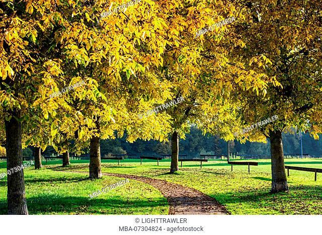 Autumnal hiking trail at the Moselle, Rhineland-Palatinate, Germany