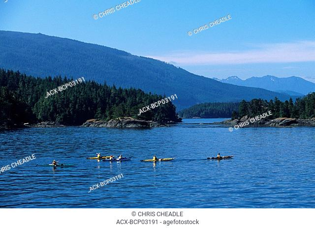 Johnstone Strait - group of orcinus orca Killer Whales, Vancouver Island, British Columbia, Canada