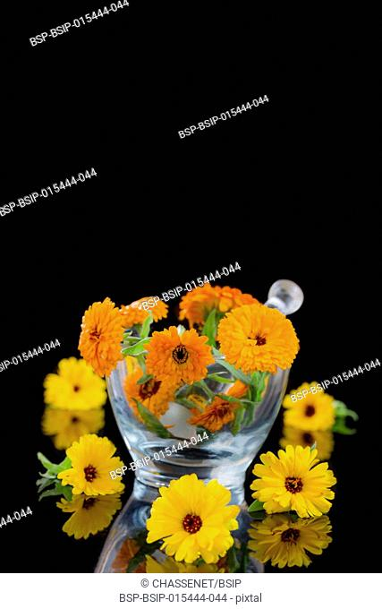 Calendula flowers in mortar on black background