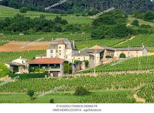France, Saone et Loire, Maconnais vineyard, Solutre Pouilly, hamlet of Pouilly, Pouilly castle
