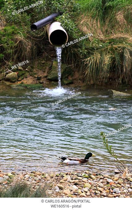 Water pouring from a drain pipe to the river, polluting the environment with a royal duck spotlight