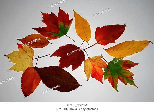 Leaves 214