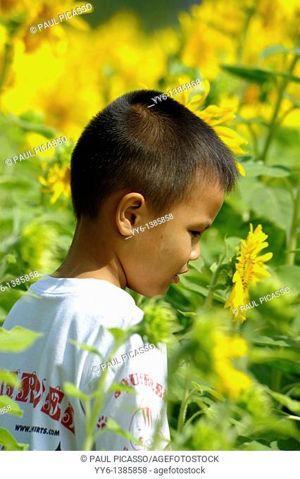 little boy playing in sunflower field , sunflower fields of lopburi , central thailand