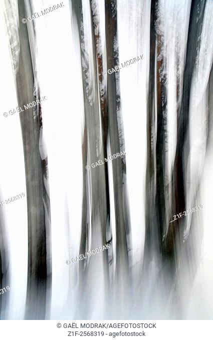 Long exposure on winter trees