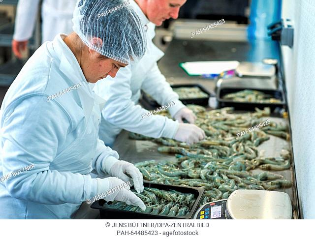 Employees Diana Jenner (front) and Anika Bibow pack freshly caught Pacific shrimps at the 'Cristalle Garnelen' shrimp farm in Grevesmuehlen, Germany